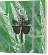 Widow Skimmer Dragonfly Wood Print