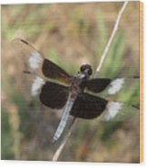 Widow Skimmer Dragonfly Male Wood Print