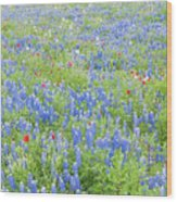 Wild About Wildflowers Of Texas. Wood Print