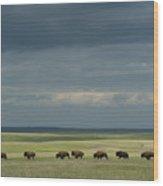 Wild American Bison Roam On A Ranch Wood Print
