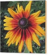 Wild And Crazy Coneflower Wood Print