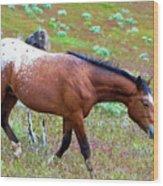 Wild Appaloosa Stallion Wood Print