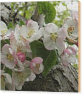 Wild Apple Blossoms Wood Print