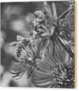 Wild Aster And Honey Bee Bw Wood Print