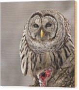 Wild Barred Owl With Prey Wood Print
