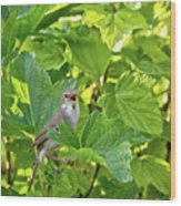 Wild Bird In A Currant Bush. Wood Print