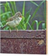 Wild Bird In A Natural Habitat.  Wood Print