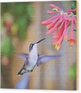 Wild Birds - Hummingbird Art Wood Print