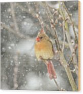 Wild Birds Of Winter - Female Cardinal In The Snow Wood Print
