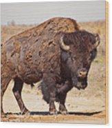Wild Bison Wood Print
