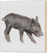 Wild Black Piglet Wood Print