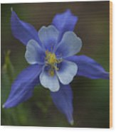 Wild Blue Wood Print by Barbara Schultheis
