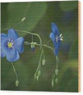 Wild Blue Wood Print