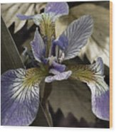 Wild Blue Iris Wood Print