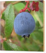 Wild Blueberries Wood Print