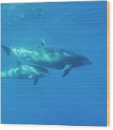Wild Bottle-nosed Dolphin Mother And Calf Wood Print