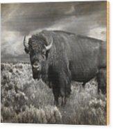Wild Buffalo In Yellowstone Wood Print