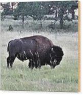 Wild Buffalo Wood Print