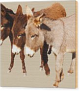 Wild Burro Buddies Wood Print