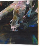 Wild Cat Drinking Wood Print