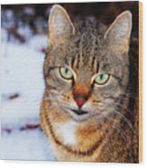 Wild Cat Wood Print