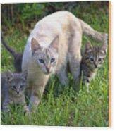 Wild Cats In Hialeah Wood Print