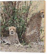 Wild Cheetahs Wood Print