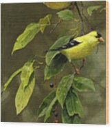 Wild Cherries And Wild Canaries Wood Print