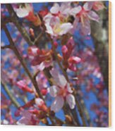 Wild Cherry Tree In Bloom Wood Print