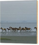 Wild Chincoteague Ponies Run Wood Print