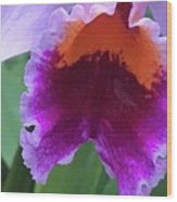 Wild Color Wood Print