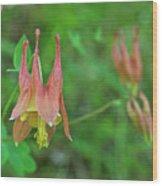 Wild Columbine Wood Print