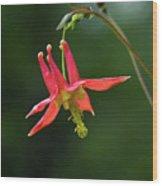 Wild Columbine Wildflower Wood Print