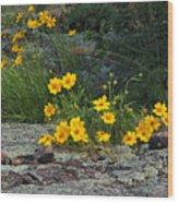 Wild Coreopsis On Hughes Mountain 1 Wood Print