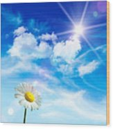 Wild Daisy In The Grass Against Bleu Sky Wood Print