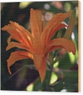 Wild Daylilies 1167 H_2 Wood Print