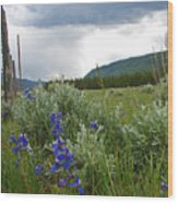 Wild Delphinium Wood Print