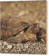 Wild Desert Tortoise Saguaro National Park Wood Print by Steve Gadomski