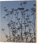 Wild Dill Silhouette Wood Print