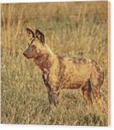 Wild Dog Of Botswana Wood Print