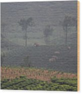 Wild Elephants, Valparai Wood Print