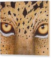 Wild Eyes Wood Print