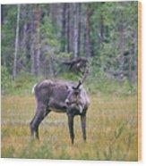 Wild Finnish Forest Reindeer 24 Wood Print