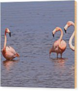 Wild Flamingos Wood Print