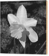 Wild Flower Oklahoma Wood Print