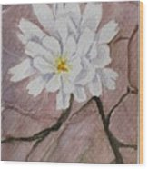 Wild Flower On The Rocks Wood Print