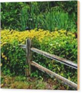 Wild Flowers And Fence Wood Print