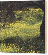 Wild Flowers In An Olive Grove Wood Print