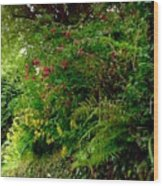 Wild Flowers On The Cliff Path Wood Print