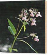 Wild Flowers Over Stream Wood Print
